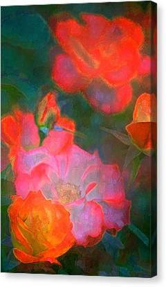 Rose 187 Canvas Print by Pamela Cooper