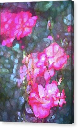 Rose 188 Canvas Print by Pamela Cooper