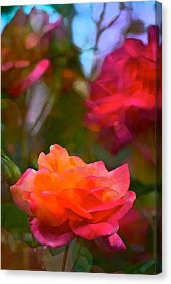 Rose 191 Canvas Print by Pamela Cooper