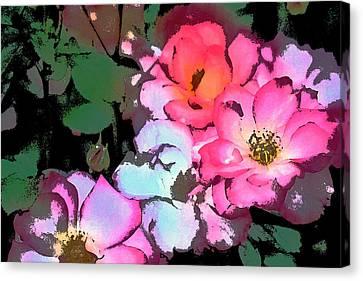 Rose 197 Canvas Print by Pamela Cooper