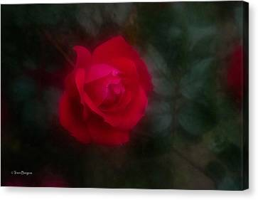 Canvas Print featuring the photograph Rose 2 by Travis Burgess