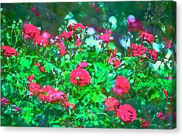 Rose 201 Canvas Print by Pamela Cooper