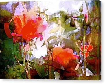 Rose 204 Canvas Print by Pamela Cooper