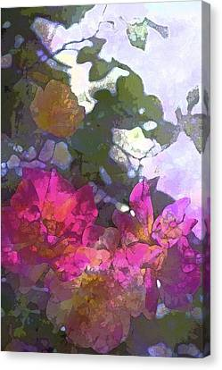 Rose 206 Canvas Print by Pamela Cooper