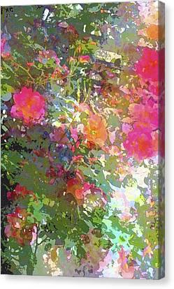 Rose 207 Canvas Print by Pamela Cooper