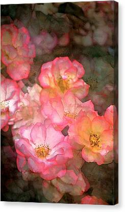 Rose 212 Canvas Print by Pamela Cooper