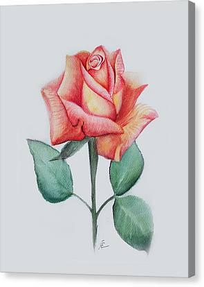 Rose 4 Canvas Print by Nancy Edwards