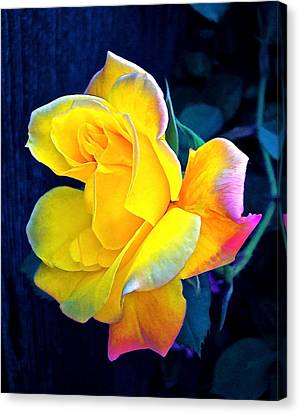Canvas Print featuring the photograph Rose 4 by Pamela Cooper