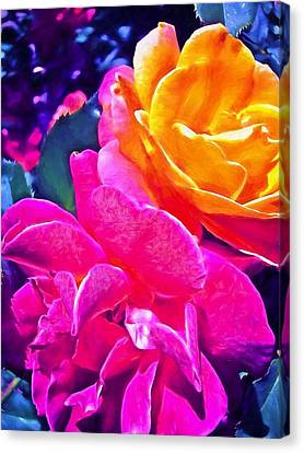 Rose 49 Canvas Print by Pamela Cooper