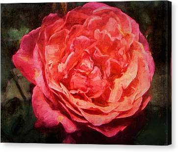 Rose 52 Canvas Print by Pamela Cooper