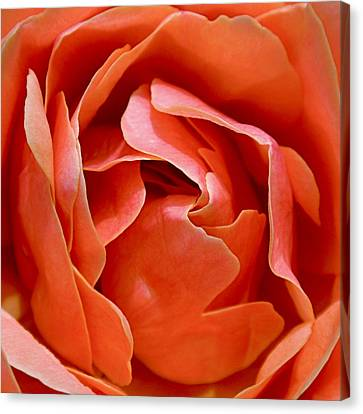 Rose Abstract Canvas Print by Rona Black
