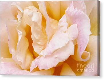 Rose Au Naturale Canvas Print