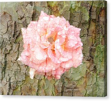 Canvas Print featuring the photograph Rose Bark by Amanda Eberly-Kudamik