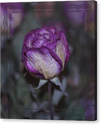 Canvas Print featuring the photograph Rose Beauty After by Sandra Foster