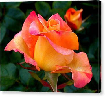 Rose Beauty Canvas Print by Rona Black