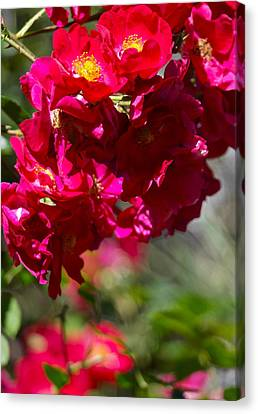 Canvas Print featuring the photograph Rose Bouquet by Michele Myers