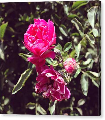 Floral Canvas Print - Rose by Christy Beckwith