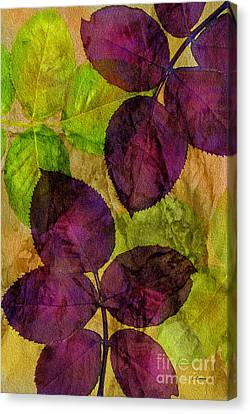 Rose Clippings Mural Wall Canvas Print by Claudia Ellis