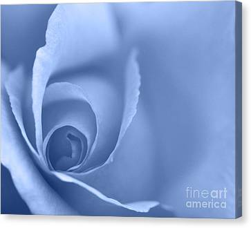 Rose Close Up - Blue Canvas Print by Natalie Kinnear