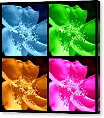 Canvas Print featuring the photograph Rose Collage by Kelly Nowak