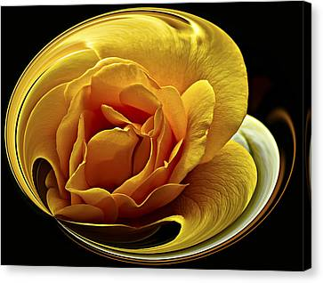Rose Cup Canvas Print by Gary Neiss