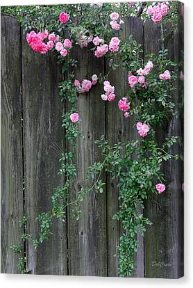 Rose Fence Canvas Print