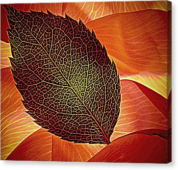 Rose Foliage On Rose Petals Canvas Print by Chris Berry