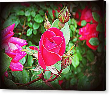 Rose Garden Centerpiece 2 Canvas Print by Pamela Hyde Wilson