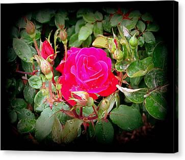 Rose Garden Centerpiece Canvas Print