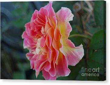 Rose Garden Canvas Print by Garnett  Jaeger