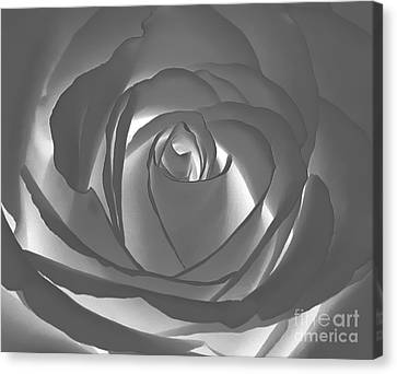 Canvas Print featuring the photograph Rose by Geraldine DeBoer