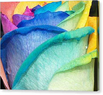 Rose Canvas Print by Haleh Mahbod