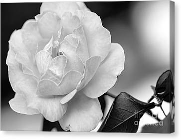 Rose In Black And White By Kaye Menner Canvas Print