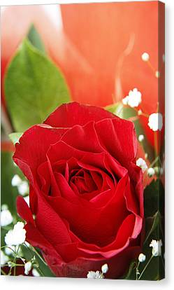 Rose Canvas Print by Les Cunliffe