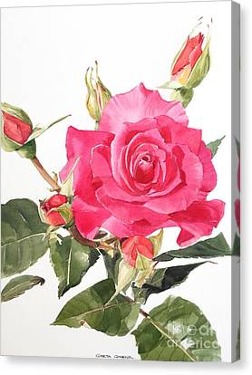 Watercolor Red Rose Margaret Canvas Print
