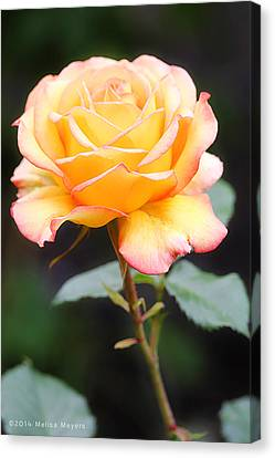 Rose Canvas Print by Melisa Meyers