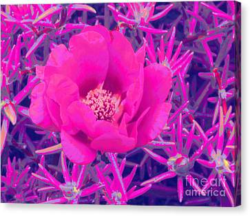 Rose Moss Single Canvas Print by Margaret Newcomb