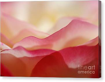 Rose Mountain Canvas Print