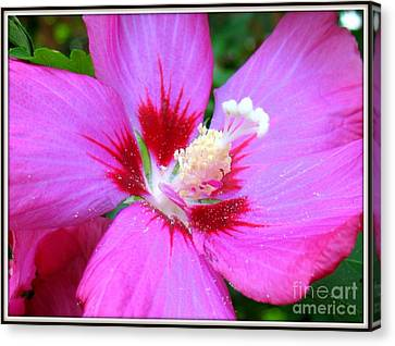 Rose Of Sharon Hibiscus Canvas Print by Patti Whitten