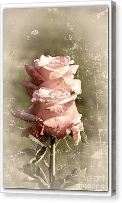 Rose Old-fashioned Canvas Print