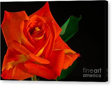 Rose On Fire Canvas Print by Art Barker