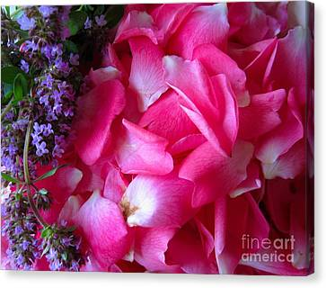 Rose Petals And Thyme Canvas Print by Margaret Newcomb