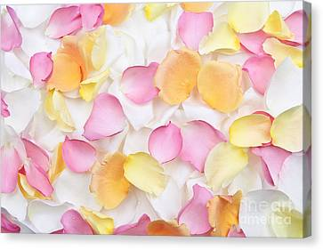 Rose Petals Background Canvas Print by Elena Elisseeva