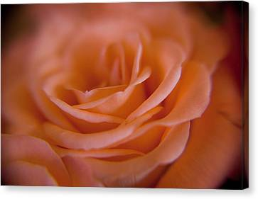 Rose Petals Canvas Print by Kim Lagerhem