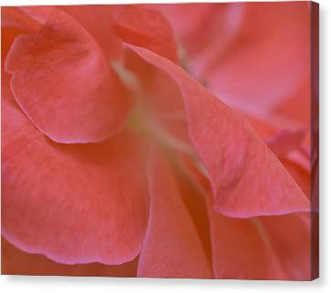 Canvas Print featuring the photograph Rose Petals by Stephen Anderson