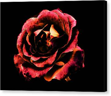 Canvas Print featuring the photograph Rose Red by Persephone Artworks