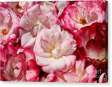 Rose River Canvas Print by Jeanette French