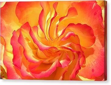 Rose Swirl Canvas Print