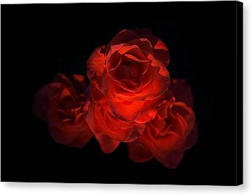 Canvas Print featuring the photograph Rose Three by David Andersen
