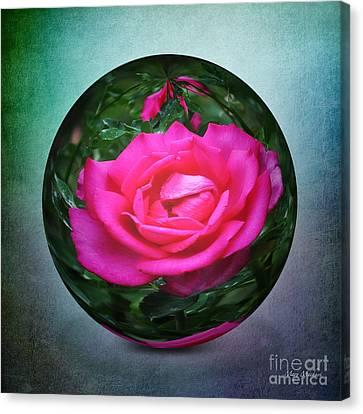 Rose Through The Glass Canvas Print